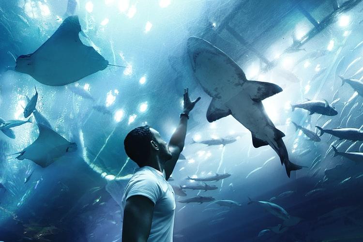 Obiettivi - squali